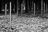 Buchenwald_005-Edit-2.jpg